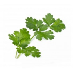 Véritable Italian Parsley Lingot