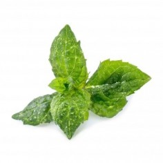 Véritable Organic Spearmint Lingot
