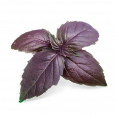 Véritable Organic Purple Basil Lingot